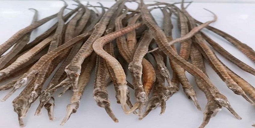 Công dụng chữa bệnh của vị thuốc hải long