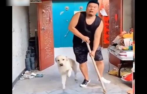 Cười không ngậm được mồm với những chú chó bá đạo nhất hệ mặt trời
