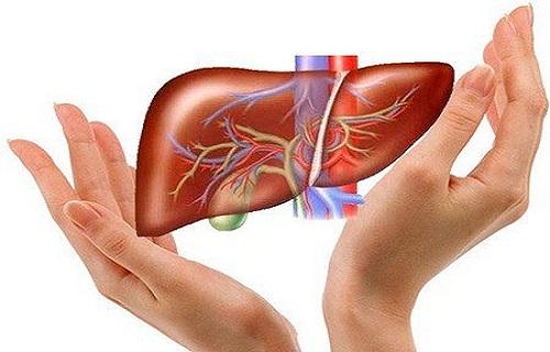 Dấu hiệu gan bị tổn thương – khi nào tìm đến bác sĩ gan mật?