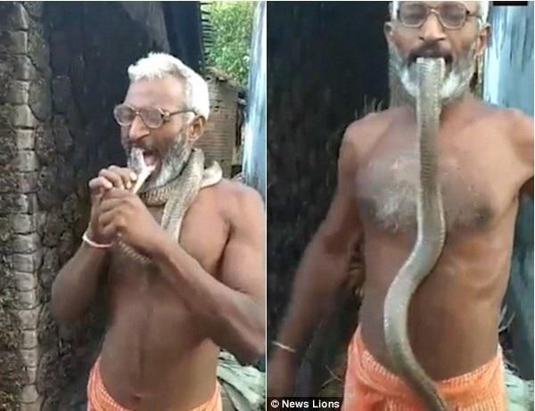 Sốc cảnh người đàn ông ngậm cả đầu con rắn hổ mang vào miệng